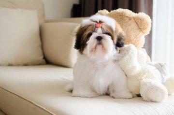 สุนัขน่ารักขนฟู