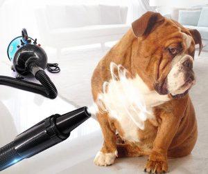 วิธีอาบน้ำสุนัข