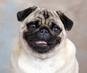 สุนัขเล็กนิยมเลี้ยง