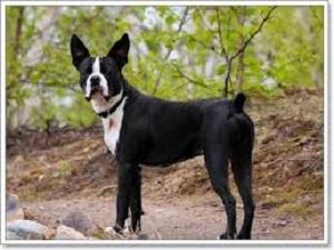 หมาคอนโด