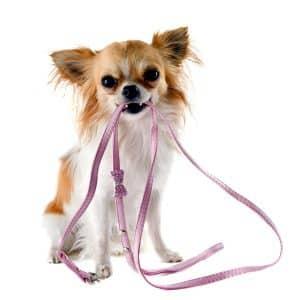 สุนัขไทย