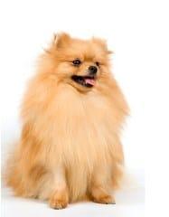 สุนัขพันธุ์ยุโรป