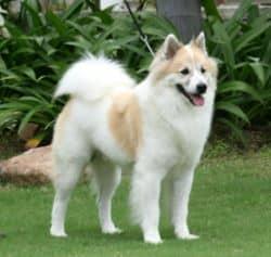 สายพันธุ์สุนัขไทย