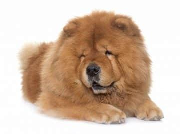 สุนัขพันธุ์จีน
